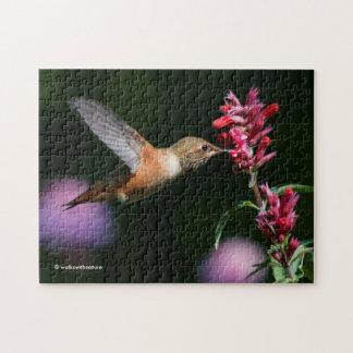 Rufous Hummingbird Feeding on the Anise Hyssop Jigsaw Puzzle