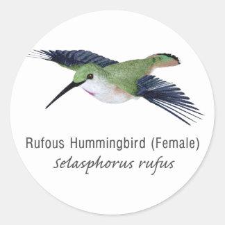Rufous Hummingbird female with Name Classic Round Sticker