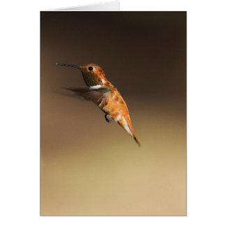 Rufous hummingbird in flight card