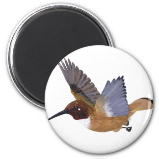 Rufous Hummingbird Male Magnet