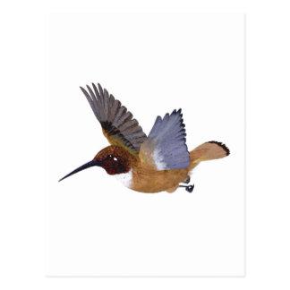 Rufous Hummingbird Male Postcard