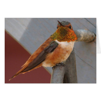 Rufous Hummingbird Notecard