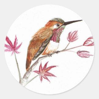 Rufous Hummingbird perching Classic Round Sticker