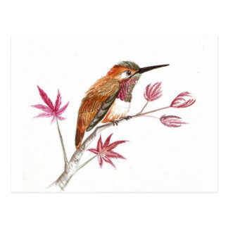 Rufous Hummingbird perching Postcard