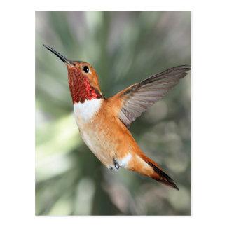 Rufous Hummingbird Postcard