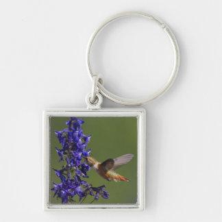 Rufous Hummingbird, Selasphorus rufus, female Keychain