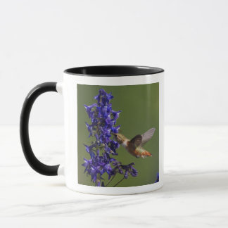 Rufous Hummingbird, Selasphorus rufus, female Mug