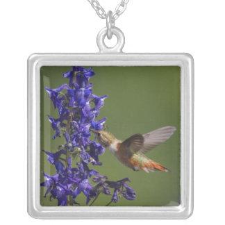Rufous Hummingbird, Selasphorus rufus, female Silver Plated Necklace