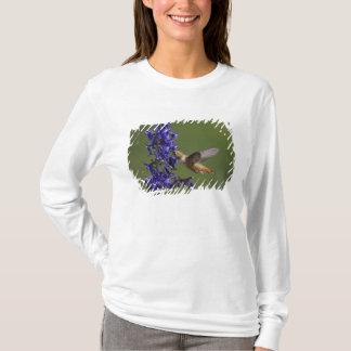 Rufous Hummingbird, Selasphorus rufus, female T-Shirt
