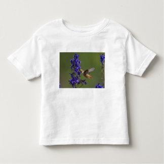 Rufous Hummingbird, Selasphorus rufus, female Toddler T-shirt