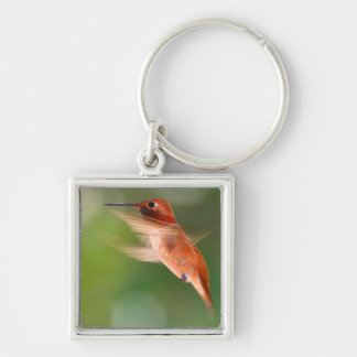 rufous hummingbird Silver-Colored square keychain