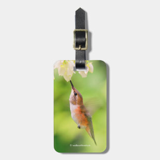Rufous Hummingbird Sips Blueberry Blossom Nectar Luggage Tag
