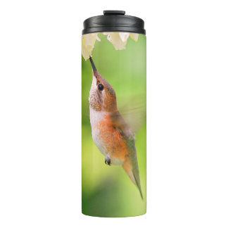 Rufous Hummingbird Sips Blueberry Blossom Nectar Thermal Tumbler