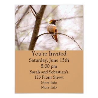 Rufous Hummingbird Sitting 4.25x5.5 Paper Invitation Card