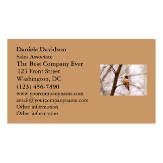 Rufous Hummingbird Sitting Business Card