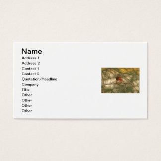 Rufous Hummingbird Sitting Business Card