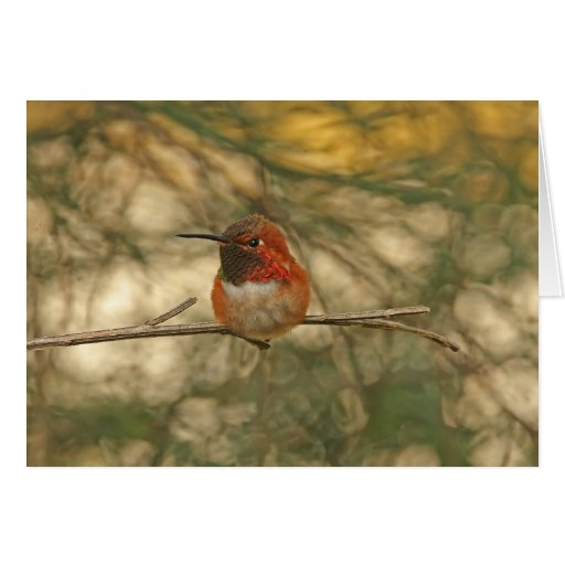Rufous Hummingbird Sitting Greeting Card