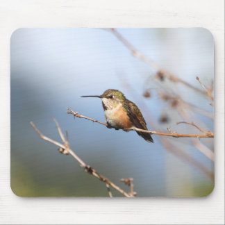 Rufous Hummingbird Sitting Mouse Pad