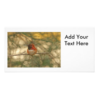 Rufous Hummingbird Sitting Custom Photo Card