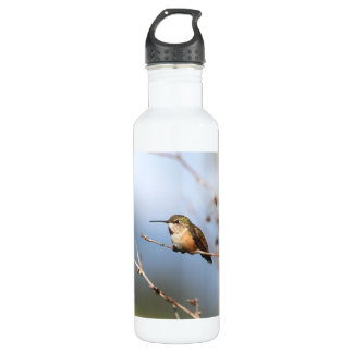Rufous Hummingbird Sitting Stainless Steel Water Bottle
