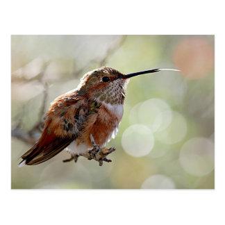 Rufous Hummingbird Tounge Postcard