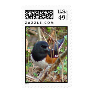 Rufous Sided Towhee Postage
