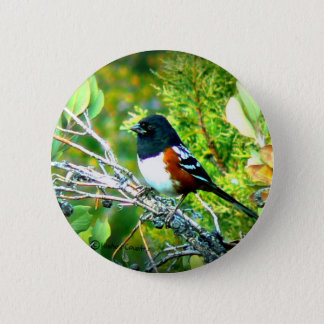 Rufous Sided Towhee Sparrow Button