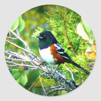 Rufous Sided Towhee Sparrow Classic Round Sticker