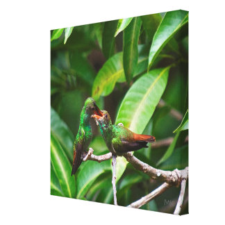 Rufous-tailed Hummingbird Feeding on Canvas