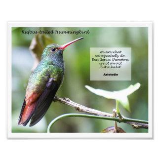 Rufous-tailed Hummingbird Photo Print