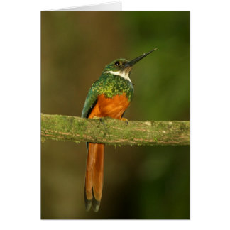 Rufous-tailed Jacamar male Greeting Cards