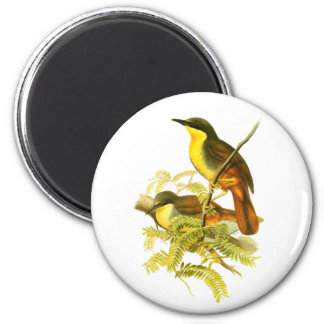 Rufous-vented Laughingthrush 2 Inch Round Magnet