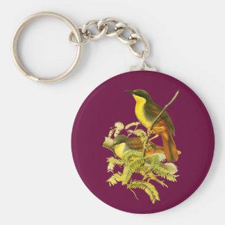 Rufous-vented Laughingthrush Basic Round Button Keychain