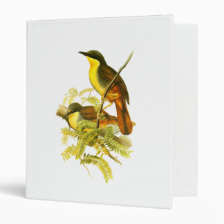 Rufous-vented Laughingthrush Binder
