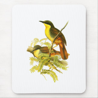 Rufous-vented Laughingthrush Mouse Pad