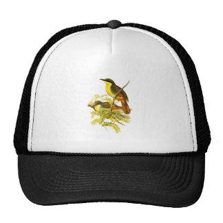 Rufous-vented Laughingthrush Trucker Hat