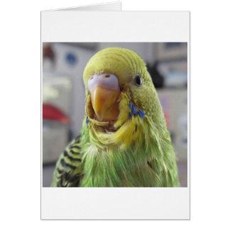 Rufus Card