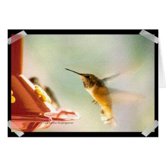 Rufus Hummingbird Card