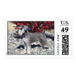 Ruger, Miniature Schnauzer Postage Stamps