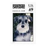 Ruger  stamps