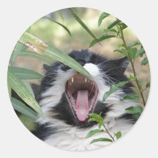Rugido salvaje del gato pegatinas redondas