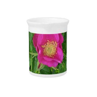 rugosa de Rosa con polen del ellow Jarrones