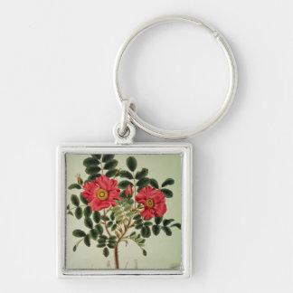 Rugosa de Rosa, de la 'flora Japonica Llavero Cuadrado Plateado