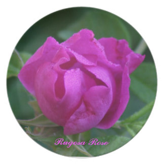 Rugosa Rose Dinner Plate