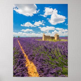Ruin in Lavender Field, France Poster