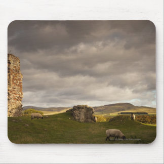 Ruins Of Cessford Castle With Sheep Grazing Mouse Pad
