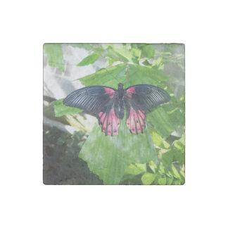 Rumanzovia Swallowtail - Female Stone Magnet