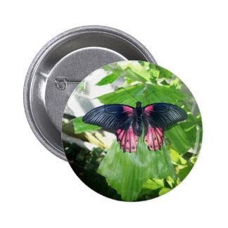 Rumanzovia Swallowtail - hembra Pin Redondo De 2 Pulgadas