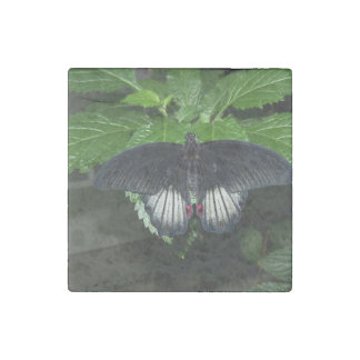 Rumanzovia Swallowtail - Male Stone Magnet