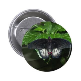 Rumanzovia Swallowtail - varón Pin Redondo De 2 Pulgadas